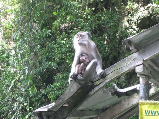 Batu Caves - Monkeys