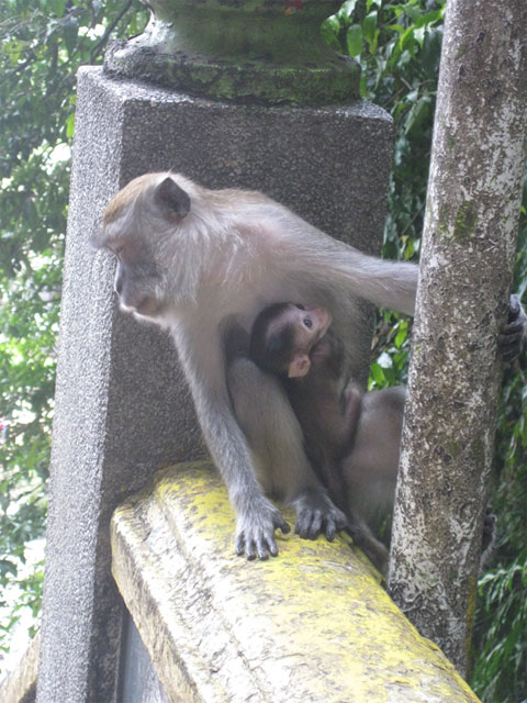 Batu Caves - More Monkeys